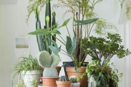 Domowa dżungla> 10 inspiracji na przechowywanie kwiatów w domu