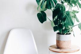 10 najmodniejszych roślin doniczkowych!