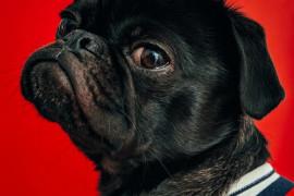 7 zaskakujących korzyści zdrowotnych z posiadania psa
