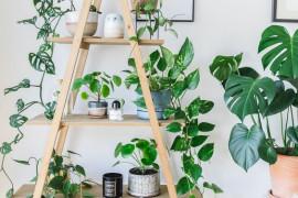 Jak zazielenić mieszkanie? 10 inspiracji na hodowlę kwiatów w domu